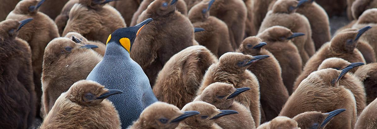 penguin-anomaly-flipped.jpg
