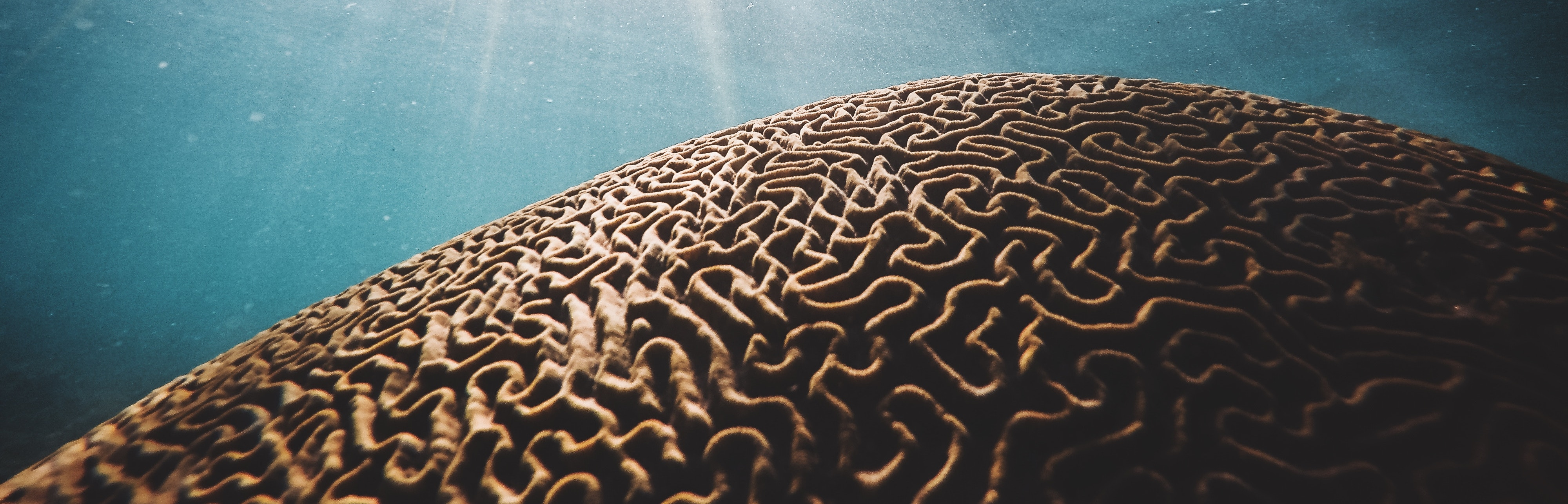 brain coral to demonstrate deep learning