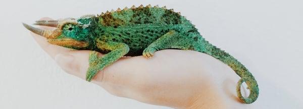 chameleon-change