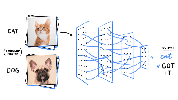 image classification cat