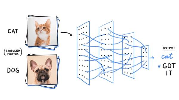 image classification cat
